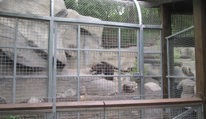 Photo for John Ball Zoo - Grizzly Exhibit